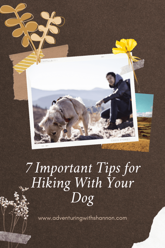 Click on the link to learn some important #tipsforhiking with your #dog! #travel #hikingwithdogs #hiking #bucketlist #usaroadtrip #northamerica #camping #dogs #travelwithdogs #hikes